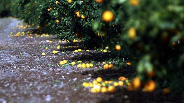 Χιλιάδες στρέμματα υπέστησαν καταστροφές από την τελευταία χαλαζόπτωση στον νομό Τρικάλων