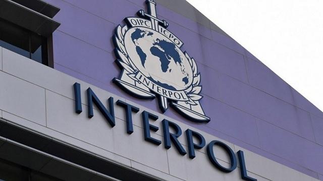 Πύθωνες, κροκόδειλοι και χιλιάδες πουλιά κατασχέθηκαν σε μεγάλη επιχείρηση της Interpol