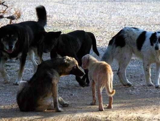 Φυλάκιση 16 μηνών σε Λαρισαίο δικηγόρο για αφρόντιστα σκυλιά