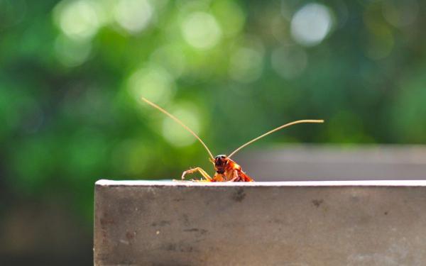 Το φυτό που απομακρύνει τις κατσαρίδες