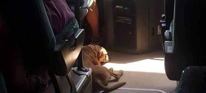 Οδηγός KTΕΛ στη Σκιάθο παίρνει μαζί του αδέσποτο σκύλο για να τον προστατέψει [εικόνα]