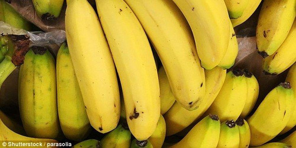 Υπό εξαφάνιση οι μπανάνες, προειδοποιούν οι ερευνητές