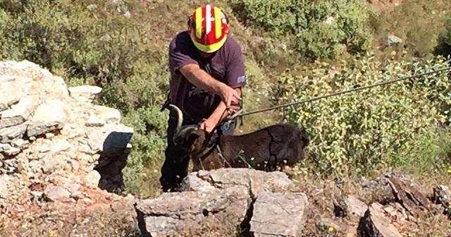 Επιχείρηση για τη διάσωση κατσικιού στη Βρύναινα