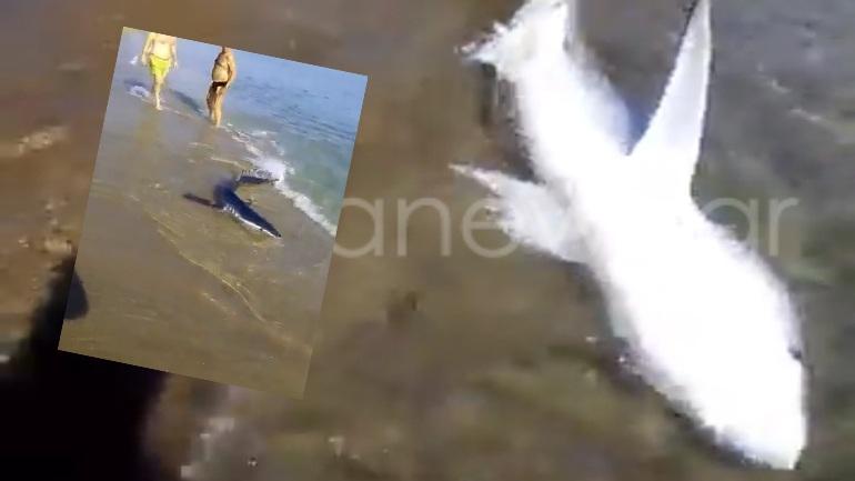 Καρχαρίας βγήκε σε παραλία των Χανίων (vid)