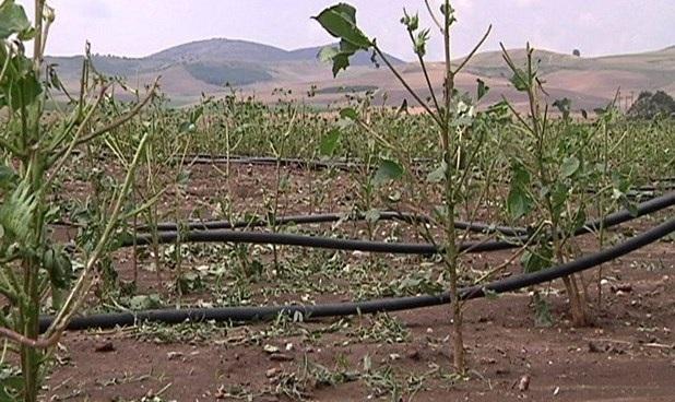 Kαταστροφικό χαλάζι στο Δήμο Κιλελέρ. Μεγάλες ζημιές σε καλλιέργειες