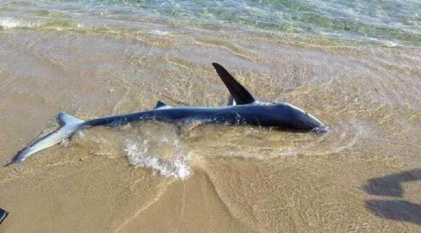 Μπροστά τους στην παραλία ένας από τους πιο επικίνδυνους και επιθετικούς καρχαρίες
