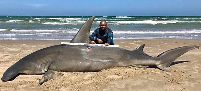 Έριξε πετονιά κι έπιασε καρχαρία τεσσάρων μέτρων! [εικόνες-βίντεο]