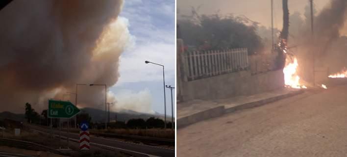 Κόλαση φωτιάς στο δάσος στην Κινέτα -Κάτοικοι εγκαταλείπουν τα σπίτια τους [εικόνες]