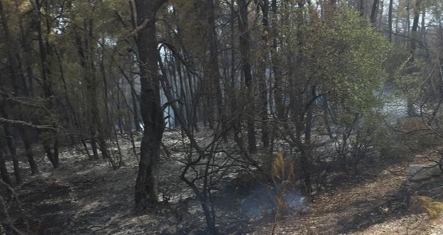 Εγιναν στάχτη 212 στρέμματα δάσους στη Σκόπελο