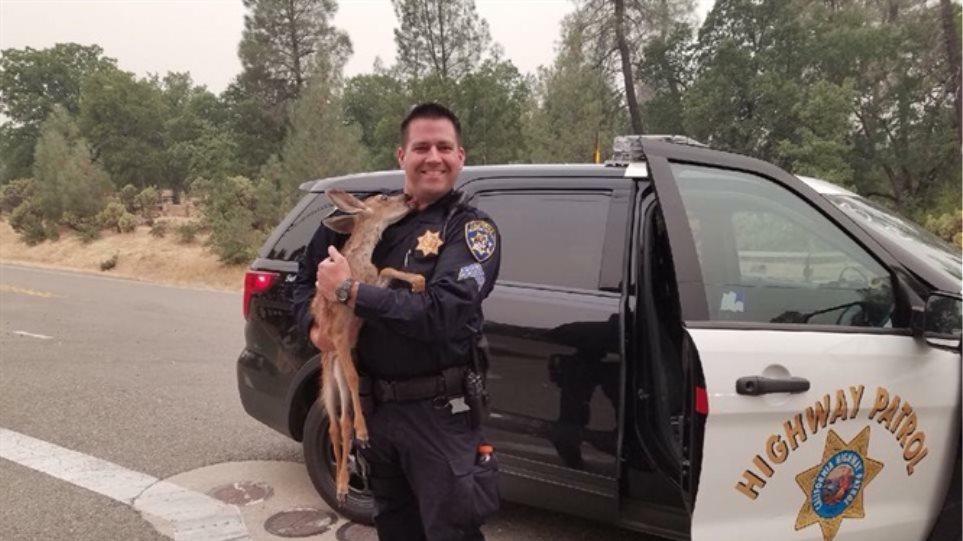 Ελαφάκι φιλά στο λαιμό αστυνομικό που το έσωσε από τις φωτιές στην Καλιφόρνια