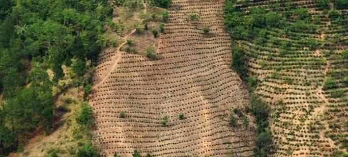 1η Αυγούστου: Σήμερα τελείωσαν τα αποθέματα του πλανήτη -Ζούμε με «πίστωση»