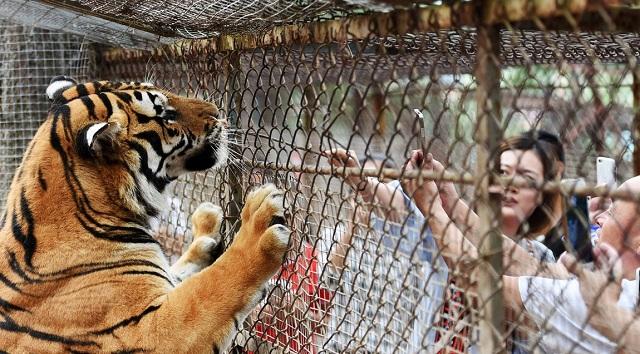 Πρόστιμα σε όσους ταΐζουν τα ζώα θα επιβάλει ο Ζωολογικός Κήπος του Πεκίνου