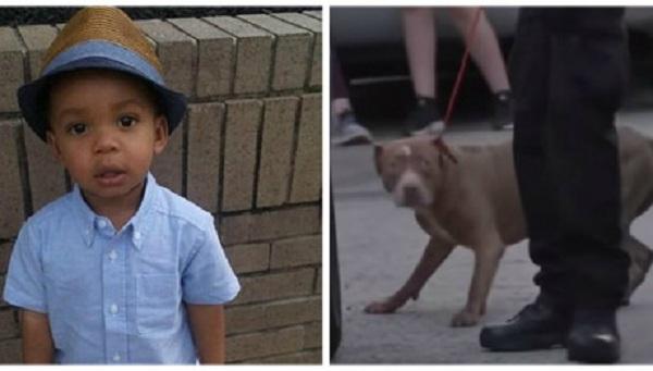 Νεκρό 2χρονο αγόρι μετά από επίθεση των pitbulls της οικογένειας