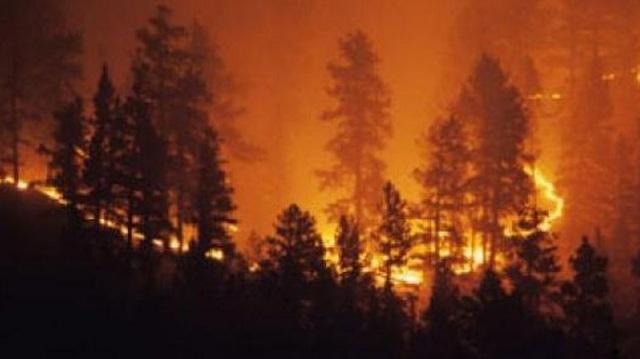 Οι Αυστραλοί κόβουν δέντρα για να προστατευθούν από τις πυρκαγιές και τα κοάλα πεθαίνουν
