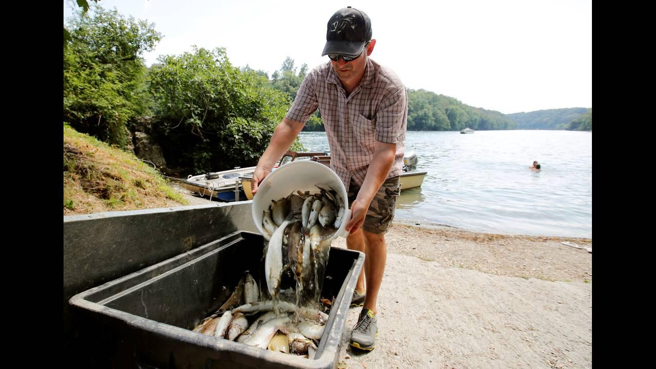 Το κύμα καύσωνα σκοτώνει τα ψάρια στον ποταμό Ρήνο