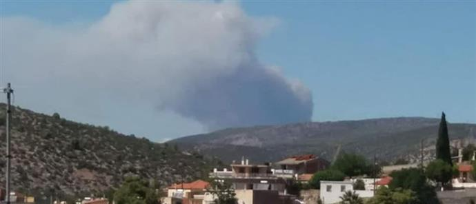 Μεγάλη φωτιά στην Εύβοια – Δόθηκε εντολή για εκκένωση δυο οικισμών – (vid)