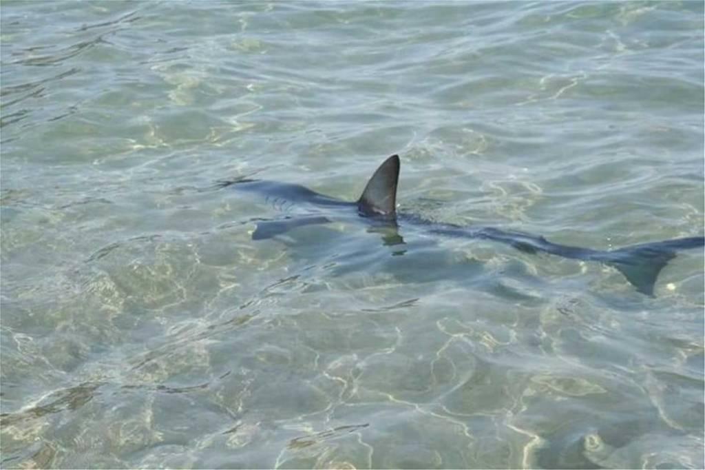 Κρήτη: Κολυμπούσαν στα ρηχά και τους πλησίασε ένας... καρχαρίας! (vid)