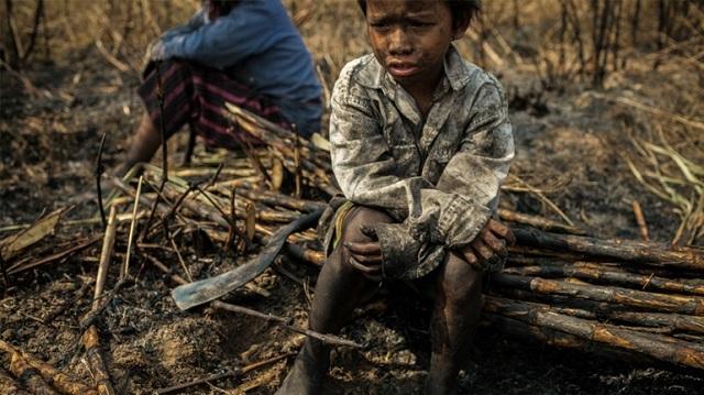 Βρετανία: Χιλιάδες «παιδιά -σκλάβοι» δουλεύουν σε παράνομες φυτείες κάνναβης στο Λονδίνο