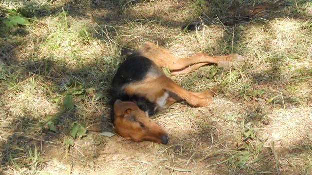 Καταγγέλλουν δεκάδες θανατώσεις σκυλιών στην Αγιά
