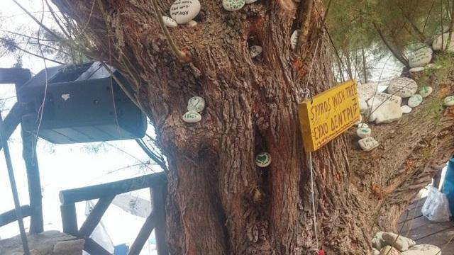Αντίπαξοι: Μαγεύει τους τουρίστες το «δέντρο των ευχών» στην παραλία της Βρίκα