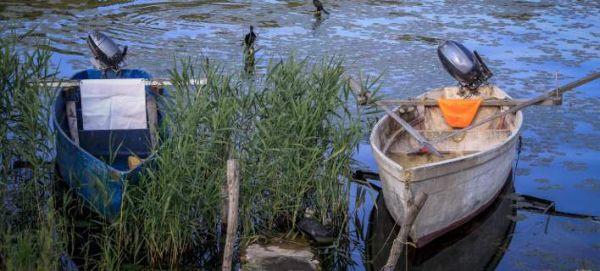 Alert στο Αιγαίο: Τοξικά ψάρια έχουν εμφανιστεί στις ελληνικές θάλασσες
