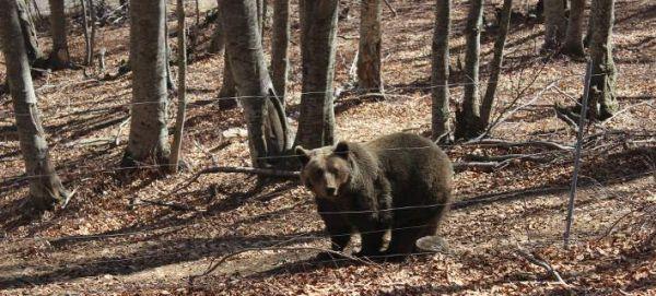 Αρκούδες προκάλεσαν ζημιές σε χωριά των Τρικάλων