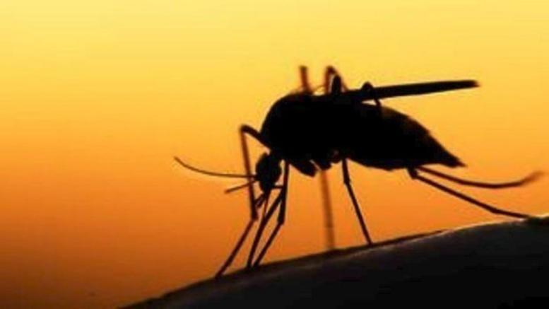 Σαράντα τα κρούσματα του ιού του Δυτικού Νείλου στην Κ. Μακεδονία