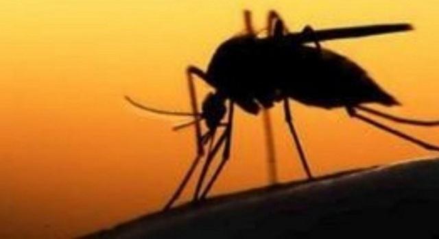 ΚΕΕΛΠΝΟ: Στους 16 ανέρχονται οι νεκροί από τον ιό Δυτικού Νείλου