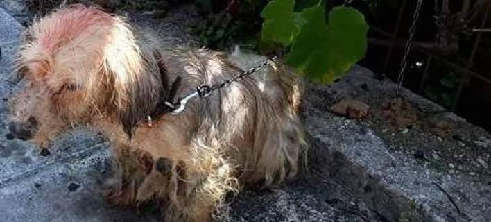 Πρόστιμο 30.000 ευρώ σε 62χρονο που περιέλουσε σκυλάκι με πετρέλαιο [εικόνες]