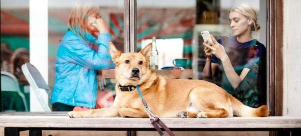 Στη Θεσσαλονίκη δημιούργησαν το Doggo: Το πρώτο facebook για σκύλους