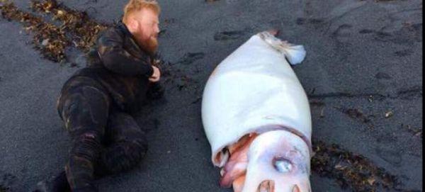 Ανδρας ξαπλώνει δίπλα σε γιγαντιαίο καλαμάρι στη Νέα Ζηλανδία