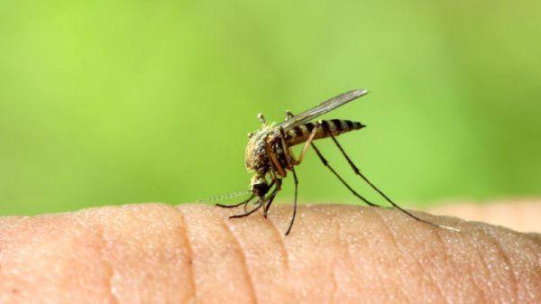 Εκτακτο σχέδιο δράσης για τον ιό του Δυτικού Νείλου ζητάει ο ΙΣΑ