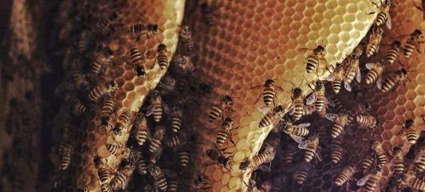 Τα τρία σημεία του σώματος που αν σε τσιμπήσει μέλισσα... γονάτισες