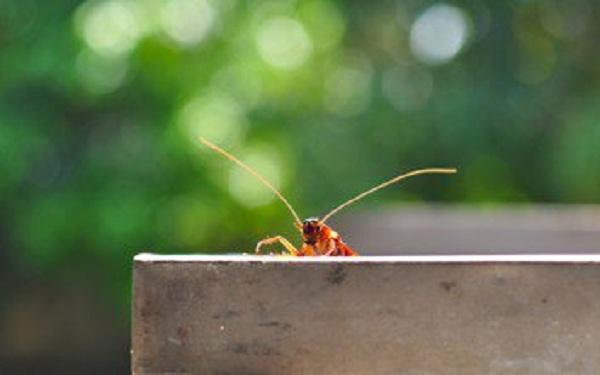 «Εφιάλτης» με ιπτάμενες κατσαρίδες