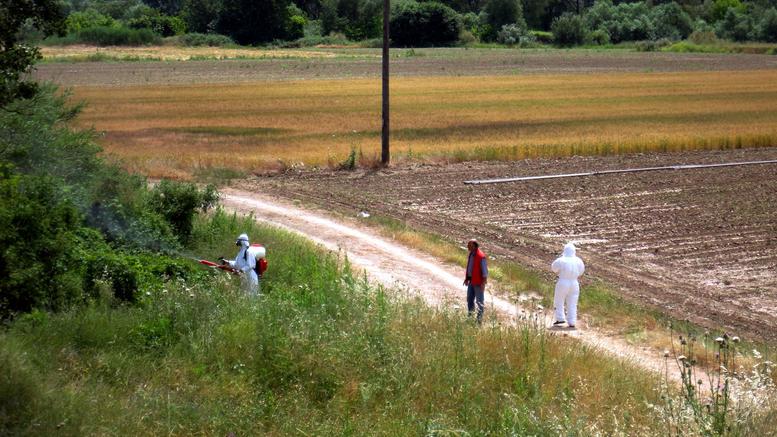 Ελληνες κάνουν στείρωση στα επικίνδυνα για την υγεία ασιατικά κουνούπια «τίγρης»