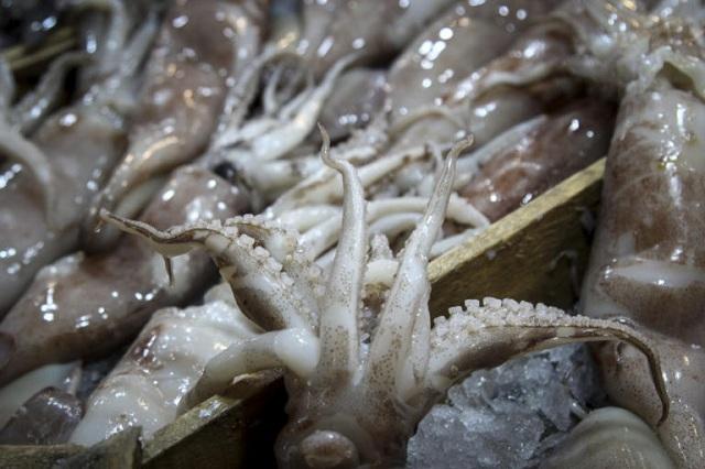 Καλαμάρια – δηλητήριο στον Πειραιά