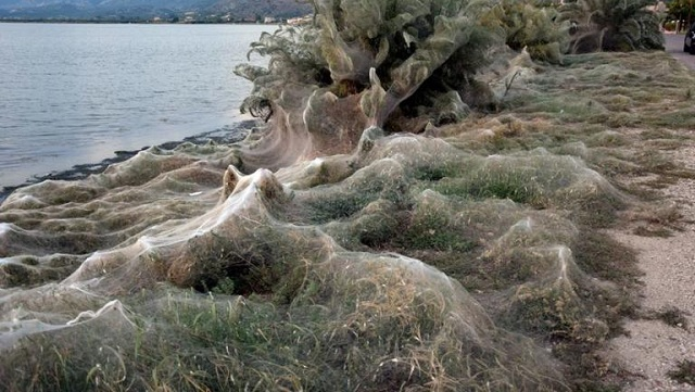 Η επιστημονική εξήγηση για το φαινόμενο με τις αράχνες στο Αιτωλικό