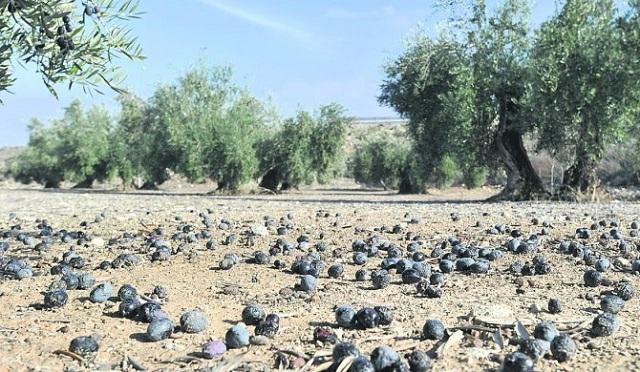 Σοβαρές ζημιές στις καλλιέργειες του Πηλίου προκάλεσε «ο Ξενοφώντας»