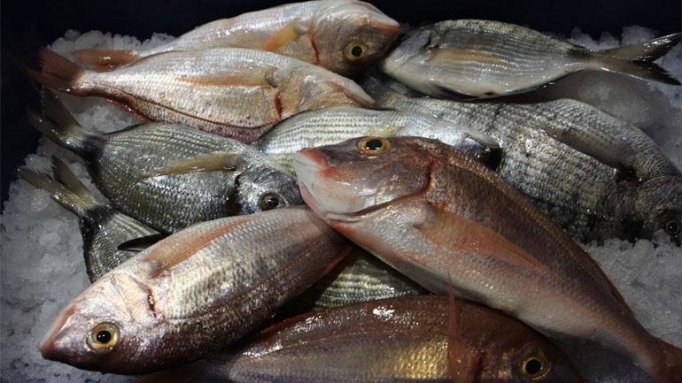 Θεσσαλονίκη: Κατασχέθηκαν 69 κιλά ακατάλληλα ψάρια στην ιχθυόσκαλα Νέας Μηχανιώνας