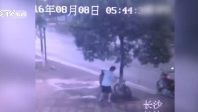 Εκοψε το δένδρο για να κλέψει ένα ποδήλατο! [βίντεο]