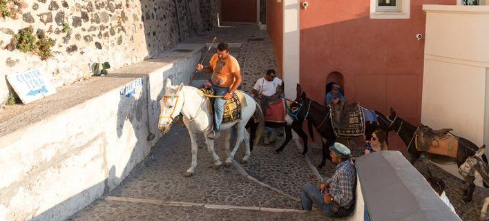 Daily Mail: Το ελληνικό υπ. Αγροτικής Ανάπτυξης απαγορεύει σε χοντρούς τουρίστες να καβαλάνε γαϊδουράκια