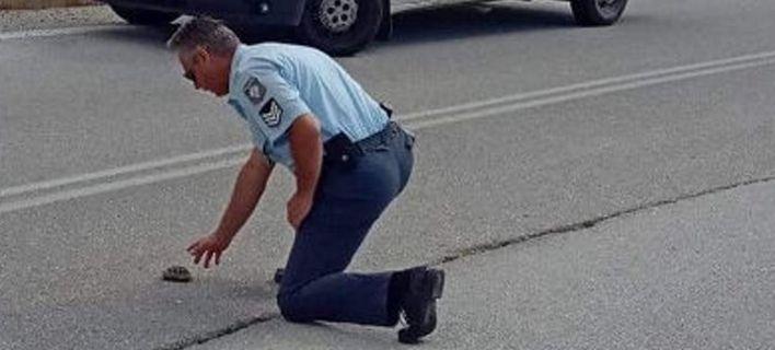 Aστυνομικός βοηθάει χελωνάκι να περάσει τον δρόμο [εικόνες]