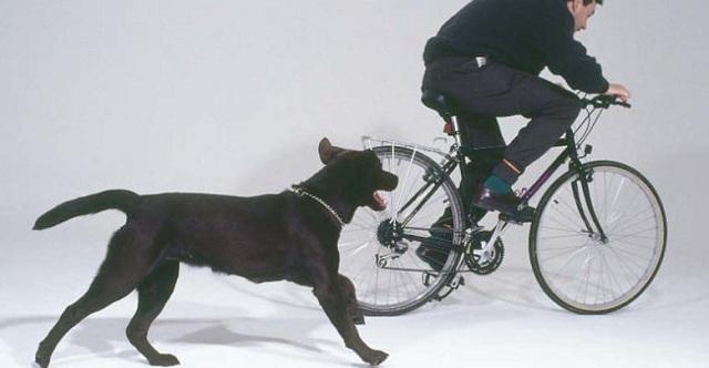 Νεαρός στο Νοσοκομείο Λάρισας από δαγκωματιές που δέχτηκε από αδέσποτα σκυλιά