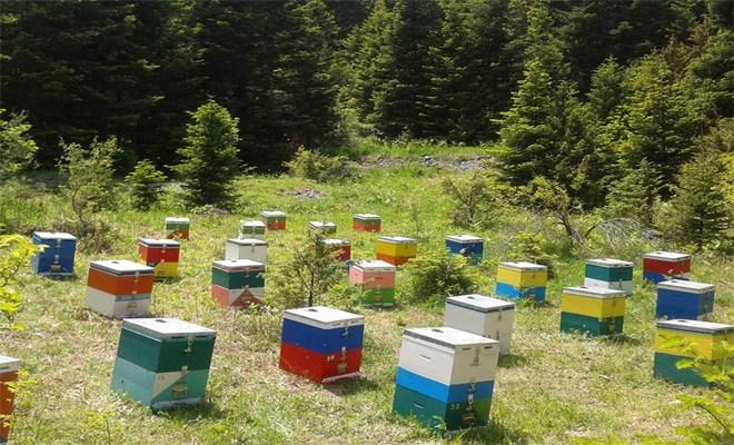 Καταδίκη 54χρονου που αποπειράθηκε να κλέψει κυψέλες μελισσών από την Κριθαριά