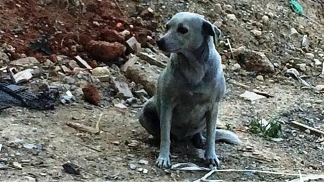 Ασυνείδητοι έβαψαν με μπλε μπογιά σκυλίτσα