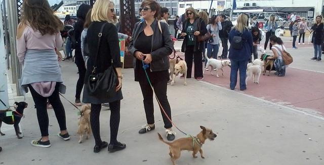 Συμμετοχή δεκάδων Βολιωτών στην πρωτοβουλία «Dog walk»