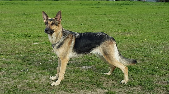 Πρόστιμο 30.000 ευρώ σε 27χρονο που σκότωσε σκύλο