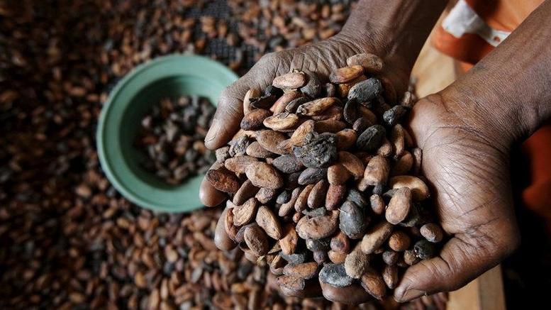 Παλαιότερη κατά 1.500 χρόνια η καταγωγή της σοκολάτας