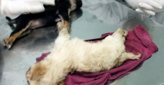 Πρόστιμο 180.000€ στον ηλικιωμένο από τα Φάρσαλα που θανάτωσε 5 κουτάβια
