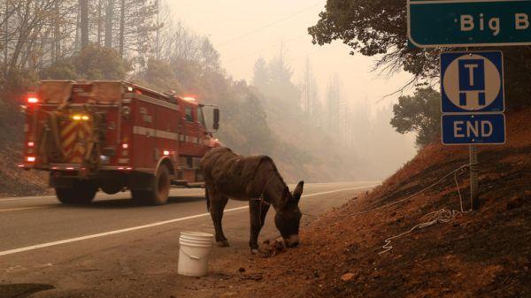 Τουλάχιστον 9 νεκροί από τις μεγάλες πυρκαγιές στην Καλιφόρνια